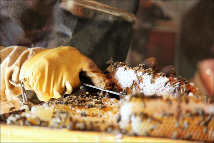 simply bee api