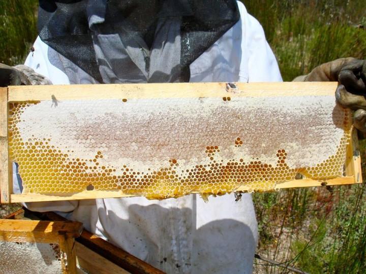 simply bee miele
